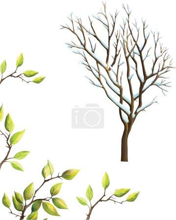 Illustration pour Hiver Arbre sans feuilles recouvertes de neige, cerisier feuilles vertes isolées sur fond blanc - image libre de droit