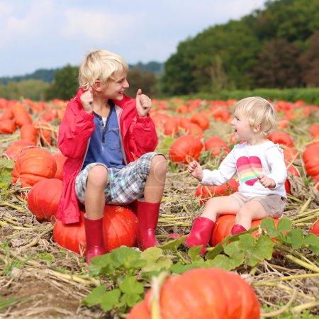 Photo pour Deux enfants joyeux, riant de garçon de l'école et sa petite sœur, fille de bébé mignon, profiter de la nature, jouer à l'extérieur aidant à la récolte bio citrouilles de plus en plus dans le domaine biologique journée ensoleillée d'automne - image libre de droit