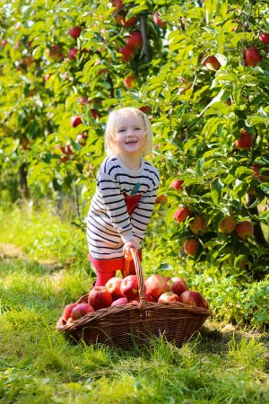 Happy child harvesting apples