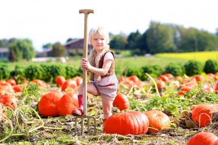 Little girl collecting pumpkins for Halloween in the field