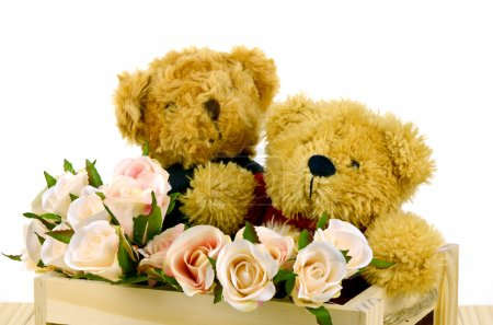 Couple of Bear and Pink Roses in Pine Wood Box on White Background.