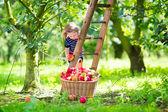Little girl in an apple garden