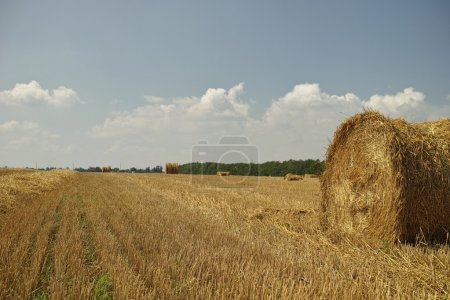 Bale of hay.