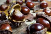 Fresh Chestnuts with Open Husk on an Old Rustic Wooden Table with Brown Autumn Leaves