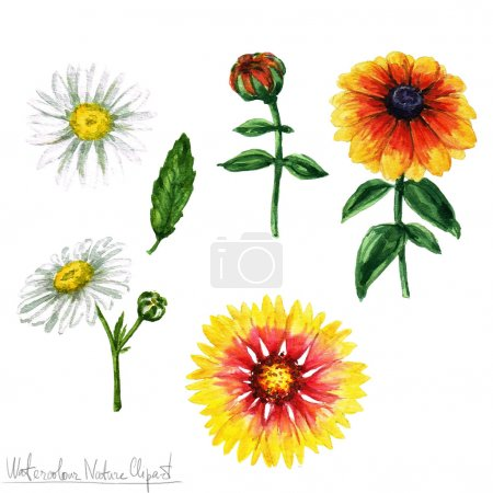 Watercolor Nature Clipart - Flowers