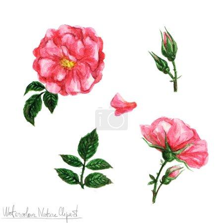 Photo pour Aquarelle Nature Clipart - fleurs isolement sur blanc - image libre de droit