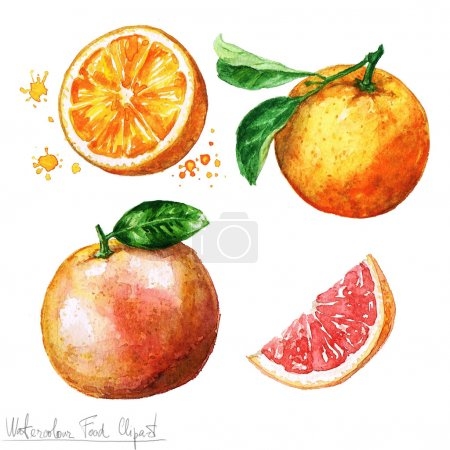 Photo pour Aquarelle Clipart nourriture - Orange et pamplemousse isolé sur blanc - image libre de droit