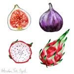Постер, плакат: Watercolor Food Clipart Pitaya and Fig