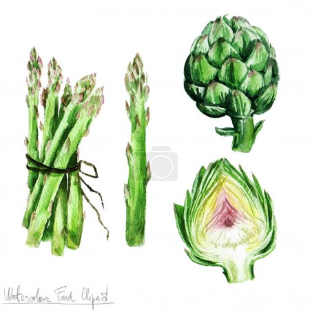 Photo for Watercolor Food Clipart - Asparagus and Artichoke  isolated on white - Royalty Free Image