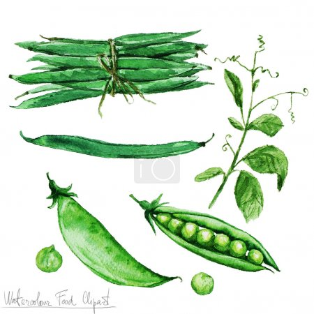 Photo for Watercolor Food Clipart - Green Beans and Peas isolated on white - Royalty Free Image