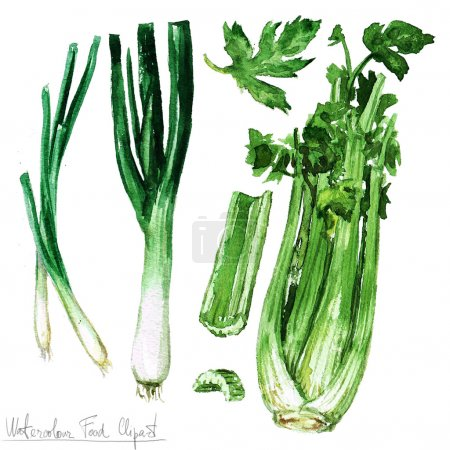 Photo for Watercolor Food Clipart - Celery, leek and spring onions isolated on white - Royalty Free Image