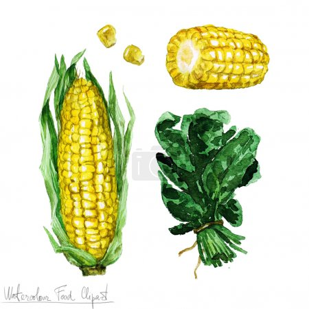 Photo for Watercolor Food Clipart - Corn and Spinach isolated on white - Royalty Free Image