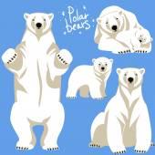 Polar Bears collection