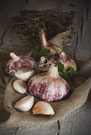 Purple garlics on a napkin on a wooden rustic table