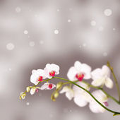 Floral background: white orchid flowers over a grey backdrop