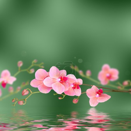 Floral background: pink orchid flowers with reflections in wavy water surface
