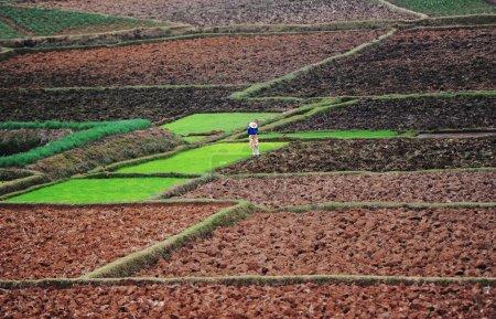 Рисовые плантации на Мадагаскаре