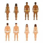 vector young woman and guy in underwear Body templates