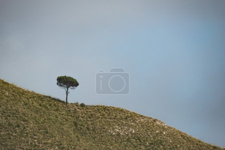 lonely tree on a mountain ridge