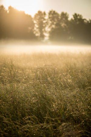 Photo pour Paysage d'été de l'épais brouillard tôt dans la matinée dans les bois à l'aube - image libre de droit