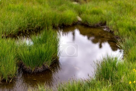 Big Puddle in a meadow after a rain storm...