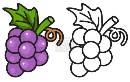 Illustration pour Illustration de raisins isolés colorés et noirs et blancs pour livre à colorier - image libre de droit