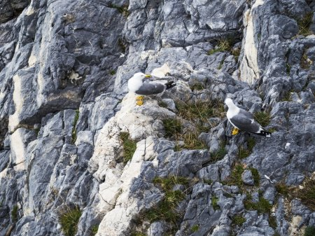 Seagulls on a cliff