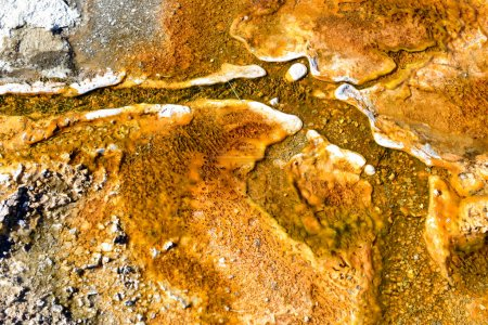 Thermophile Bacteria mats in hot spring runoff, Yellowstone National Park
