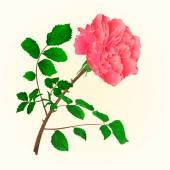 Rose pink blossoms stem with leaves vector illustration