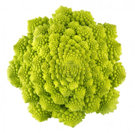 Romanesco broccoli cabage (Brassica oleracea) on a...
