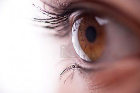 Photo pour Femme brune oeil regardant de près - image libre de droit