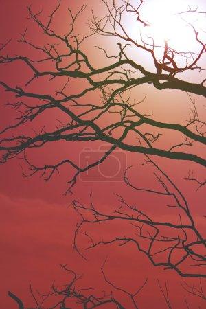 Dark sillouette of tree