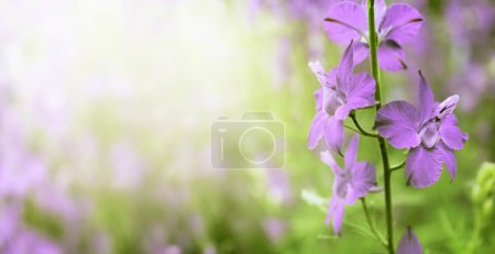 Photo for Beautiful vivid purple flowers close-up - Royalty Free Image