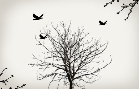 Dry tree and birds