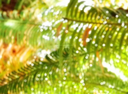 tropical palm tree foliage