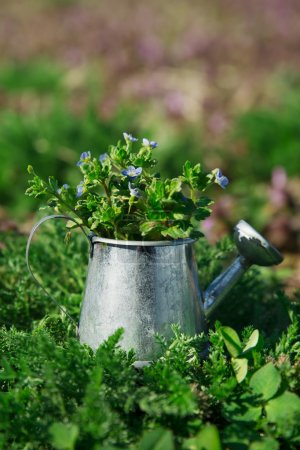 Garden tools, watering can and flowers on green garden backgroun