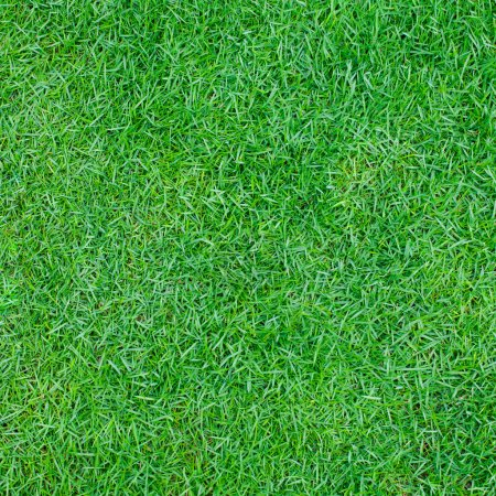Photo for Green grass background Top view Copy space - Royalty Free Image