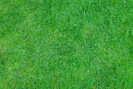 Green grass background Top view Copy space