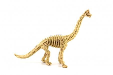 Apatosaurus fossil skeleton toy isolated on white.
