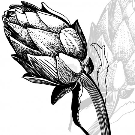 Illustration with  vegetable artichoke