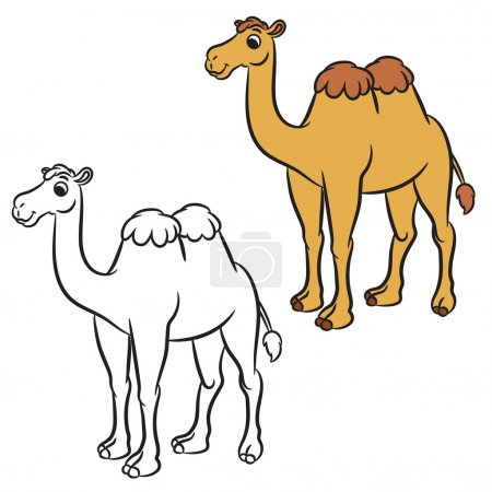 Illustration of cute camel. Coloring book