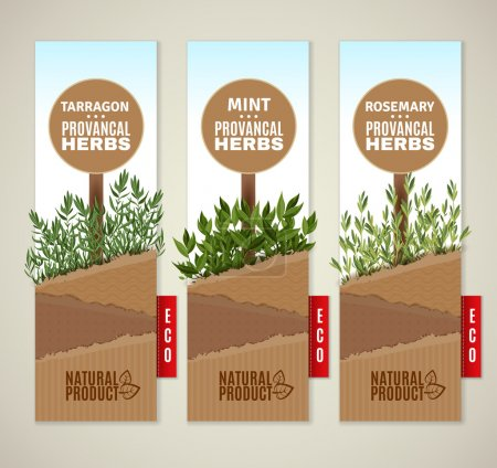 Illustration for The set of three vertical banners with Provencal herbs. Herbs de Provence banners. Vector banners - Royalty Free Image