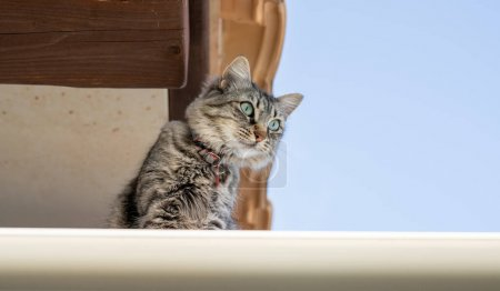 Cute brown cat on the roof...