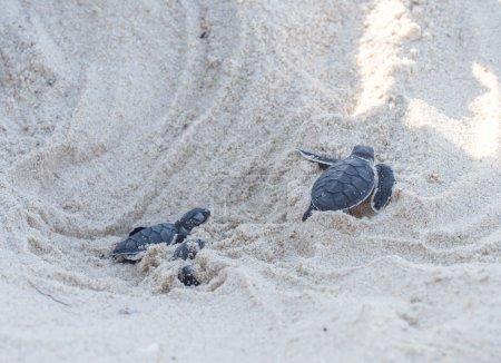 Small green sea turtles