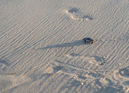 Small green sea turtle