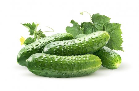 Photo for Cucumber group and leaves isolated on white as package design element - Royalty Free Image