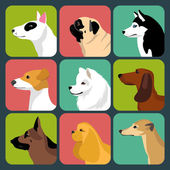 set of different dogs icons