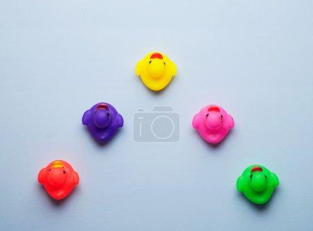 Multiple colorful rubber ducks