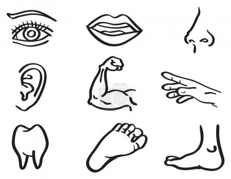 Illustration for Vector illustration of human body parts, eye, mouth, nose, ear, arm, hand, tooth and foot isolated on white background - Royalty Free Image