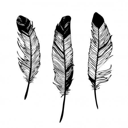 feathers black and white graphic drawing